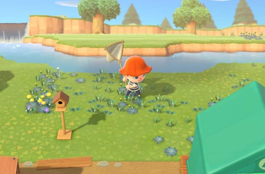 Red animal crossing